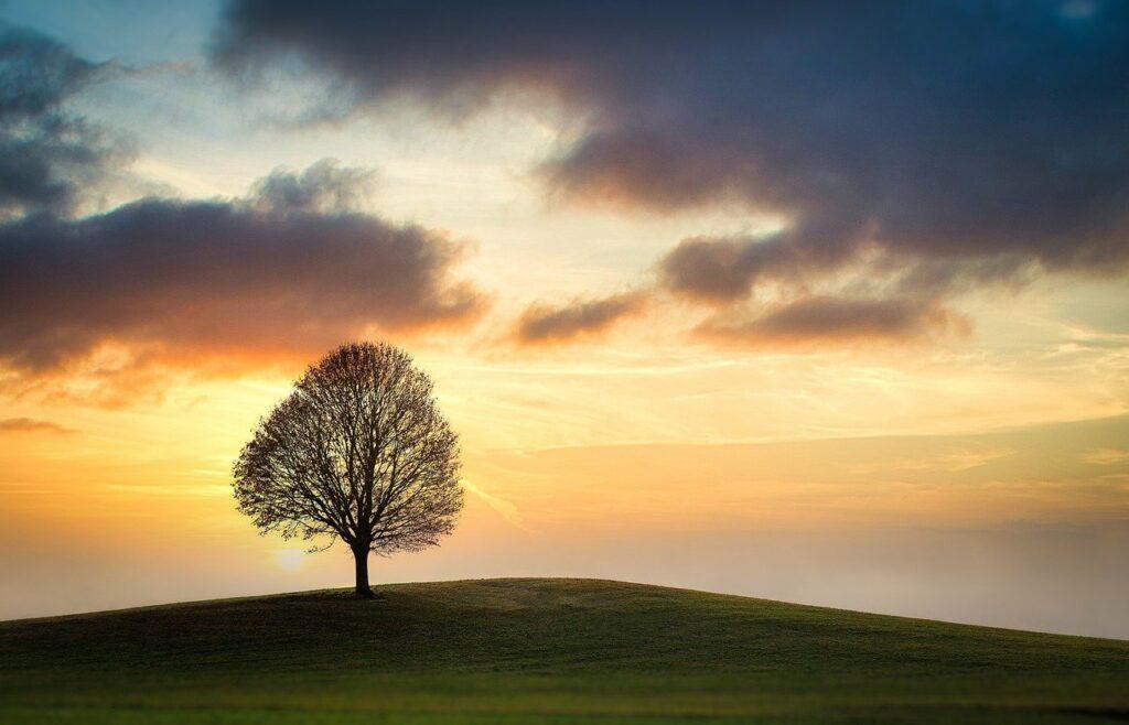 sky, tree, field